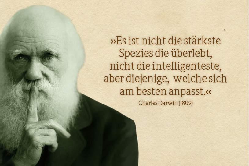 SEO der digitale Darwinismus